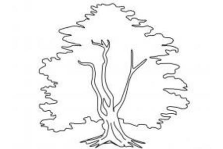 大树简笔画画法