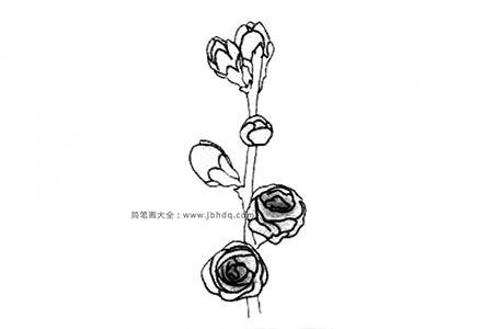 冬天的花朵 梅花