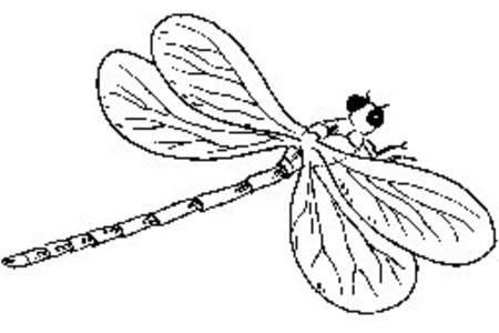 可爱的蜻蜓简笔画