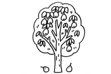 卡通梨树简笔画图片