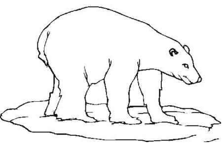 学画简单的北极熊