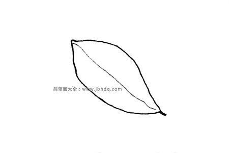普通形状的树叶
