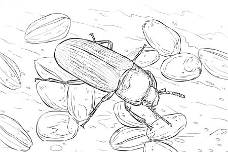 在找食物的甲虫