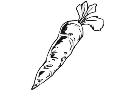 如何画胡萝卜