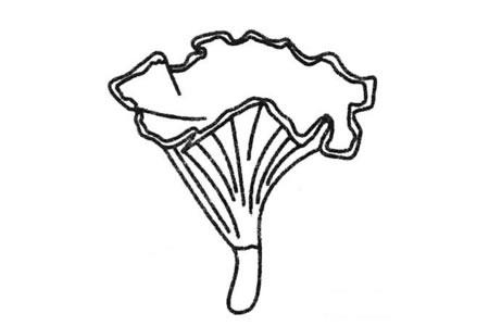 蘑菇简笔画图片大全