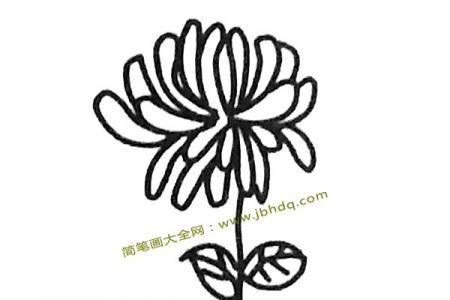 一组菊花的简笔画图片