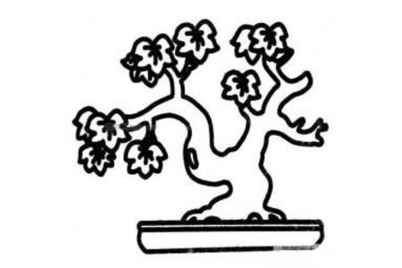 植物盆景简笔画图片