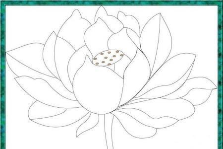 手绘一朵漂亮的荷花素描