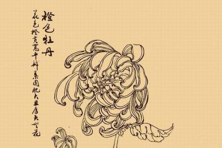 手绘牡丹花简笔画