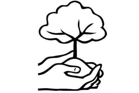 爱护我们的树