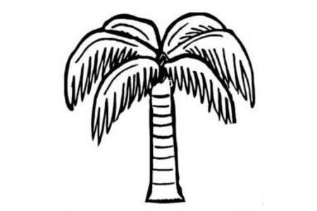 2016夏日沙滩椰子树简笔画