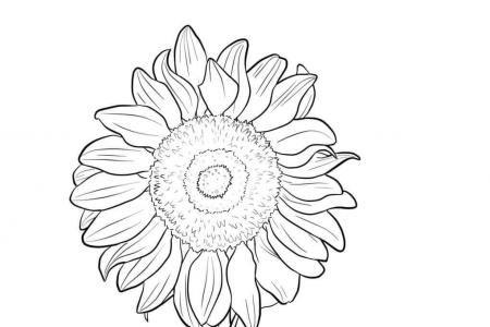向日葵的画法