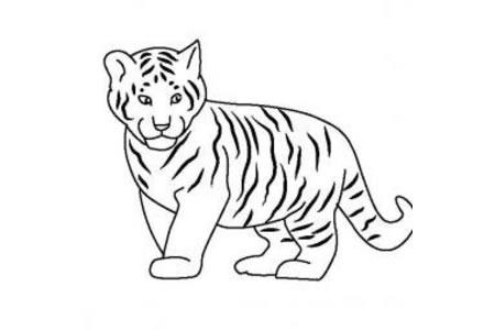 动物简笔画 老虎宝宝简笔画图片