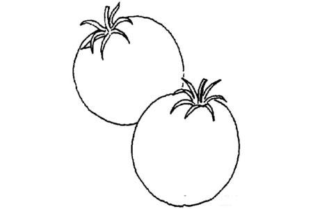 两个西红柿怎么画