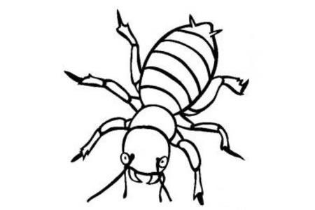 昆虫图片 马铃薯甲虫简笔画图片
