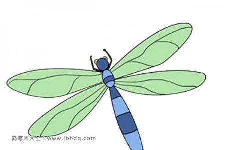 漂亮的蜻蜓简笔画图片