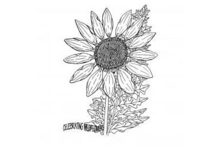 唯美向日葵