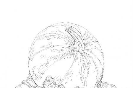 地里的南瓜