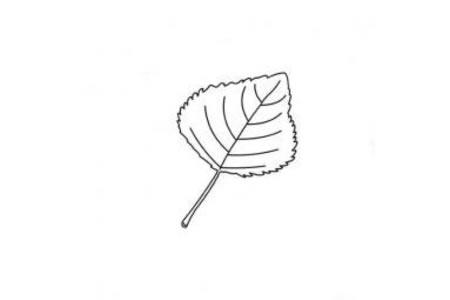 植物简笔画 关于树叶简笔画图片