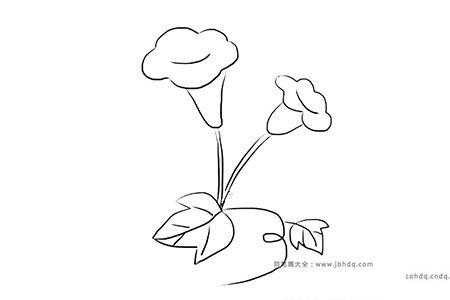 漂亮的喇叭花的简笔画