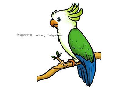 站在树枝上的鹦鹉