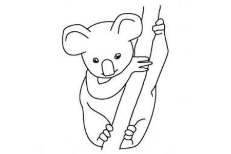 动物简笔画 考拉宝宝简笔画图片