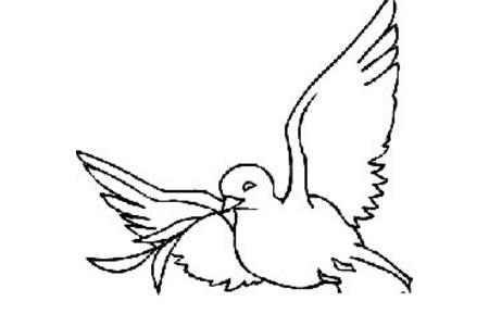 教你如何简单的画和平鸽