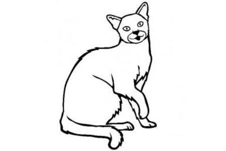 猫咪图片 俄罗斯蓝猫简笔画