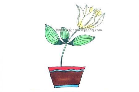 画百合花盆栽