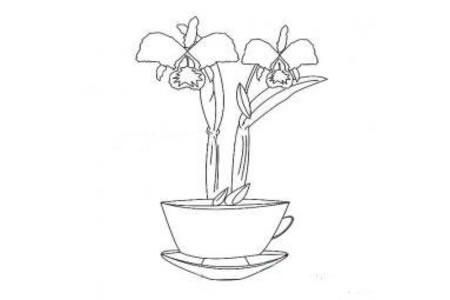 漂亮的盆栽简笔画