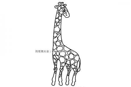 简笔画图片长颈鹿