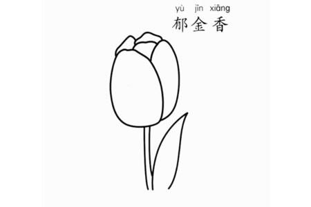 郁金香花朵怎么画