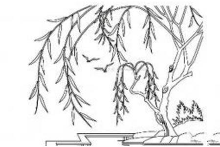 小河边的柳树简笔画
