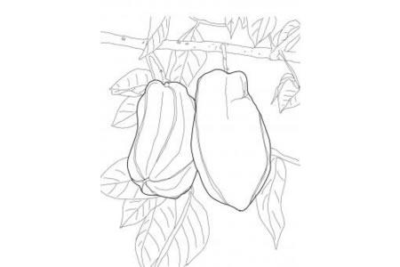 树上的杨桃简笔画图片