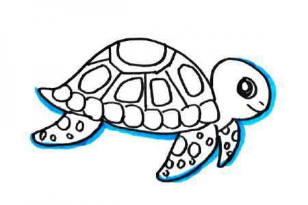 海龟和海马