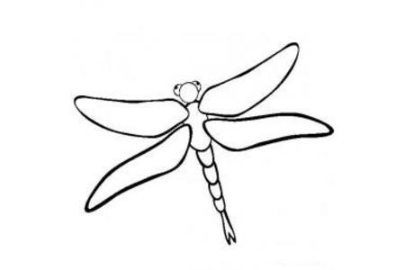 昆虫图片 蜻蜓简笔画图片
