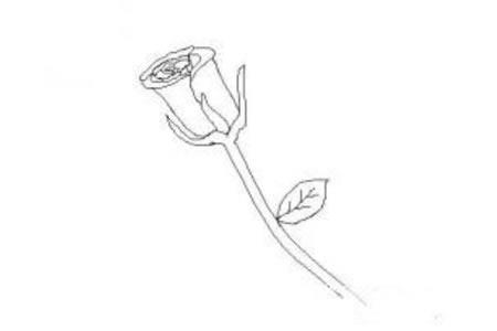 花朵简笔画大全 简单的玫瑰花简笔画