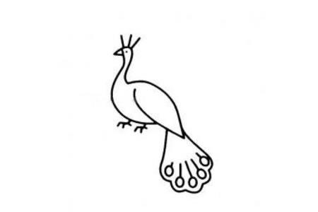 散步的孔雀简笔画