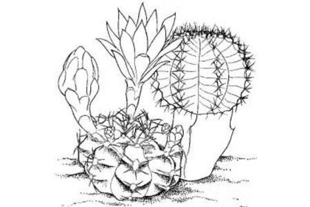 植物简笔画大全 仙人球简笔画