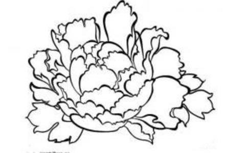 儿童花朵简笔画 牡丹花的画法