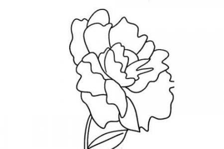 漂亮的牡丹花简笔画