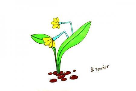 漂亮的水仙花怎么画