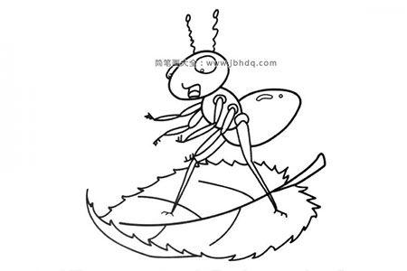 乘坐树叶船的蚂蚁
