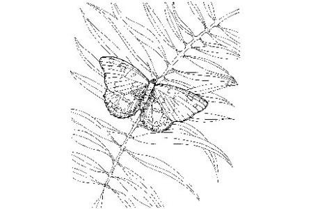 蝴蝶和植物简笔画