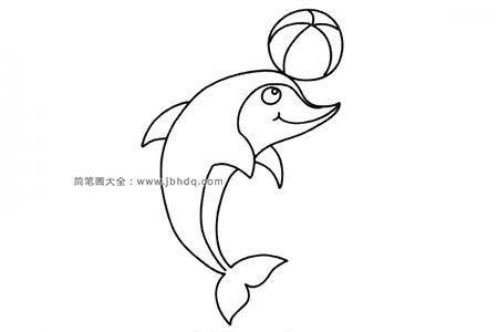 顶篮球的海豚