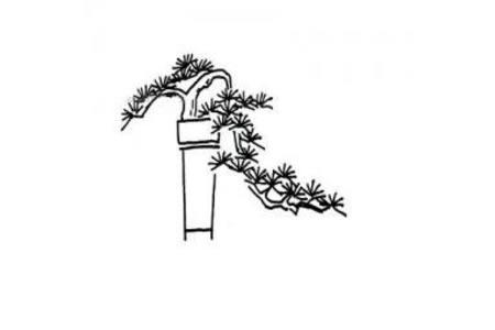 盆景松树的简笔画图片