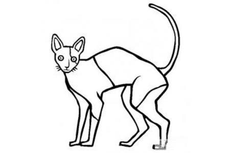 猫咪图片 柯尼斯卷毛猫简笔画