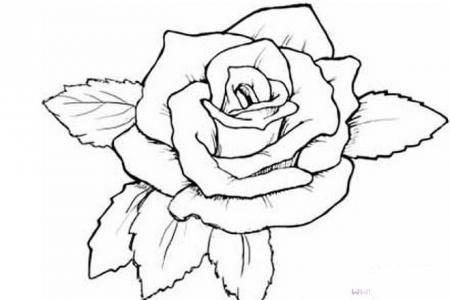 手绘红色大玫瑰花
