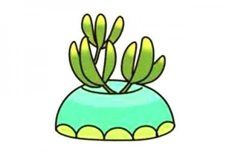 漂亮的多肉植物简笔画6