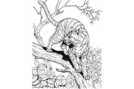 树上的老虎